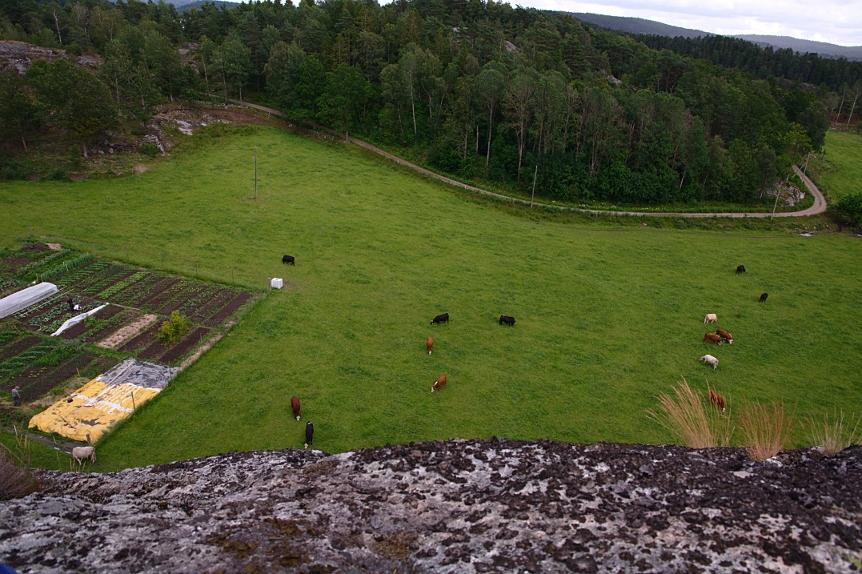Odlingslandet vid Borgås, Bokenäs, placerat i en beteshage.